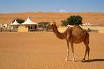 Оман: кемп в песках Вахиба
