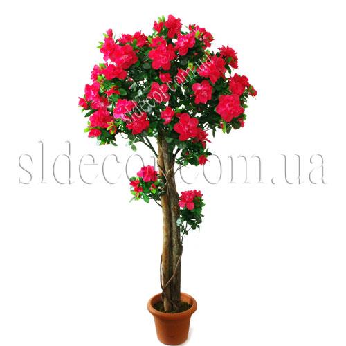 Комнатные деревья с розовыми цветами