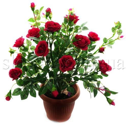 Куст красных роз 27 цветочков высота