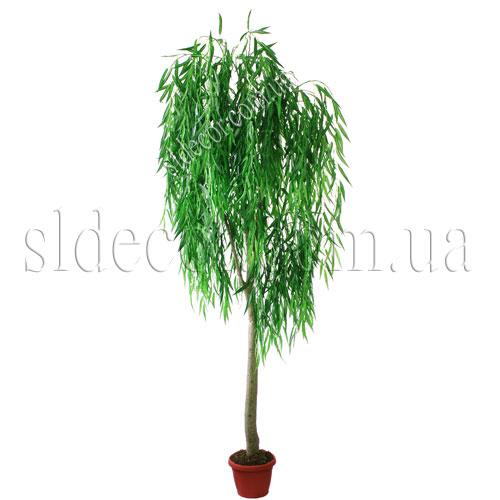 деревья ива: