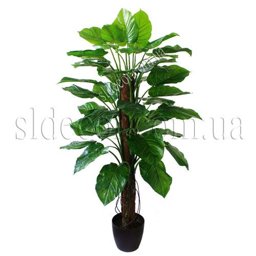 Кора пальмы продается без вазона