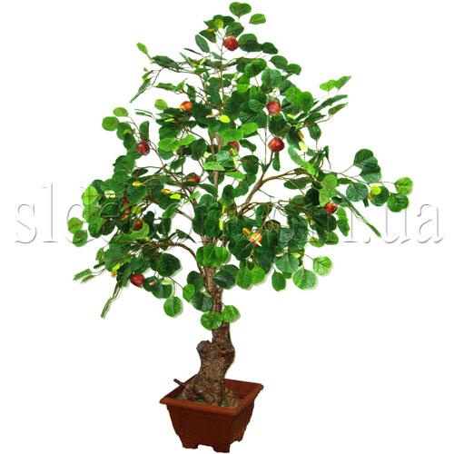 Яблоня высота 160см дерево продается