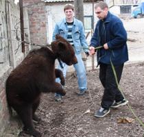 Дело для медведя. Луганские журналисты вырвали из лап смерти краснокнижного косолапого