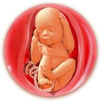Родить или убить? Из-за абортов украинская нация оказалась на грани вымирания